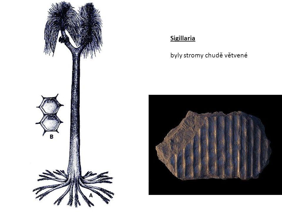 Sigillaria byly stromy chudě větvené