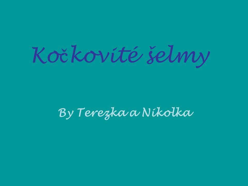 Kočkovité šelmy By Terezka a Nikolka