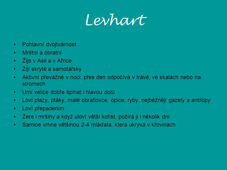 Levhart Pohlavní dvojtvárnost Mrštní a obratní Žije v Asii a v Africe
