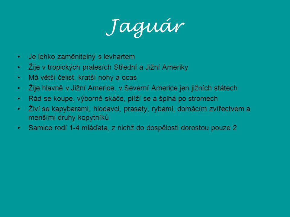 Jaguár Je lehko zaměnitelný s levhartem