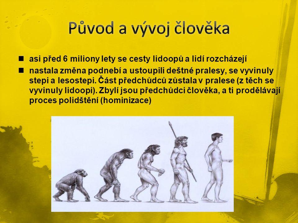 Původ a vývoj člověka asi před 6 miliony lety se cesty lidoopů a lidí rozcházejí.