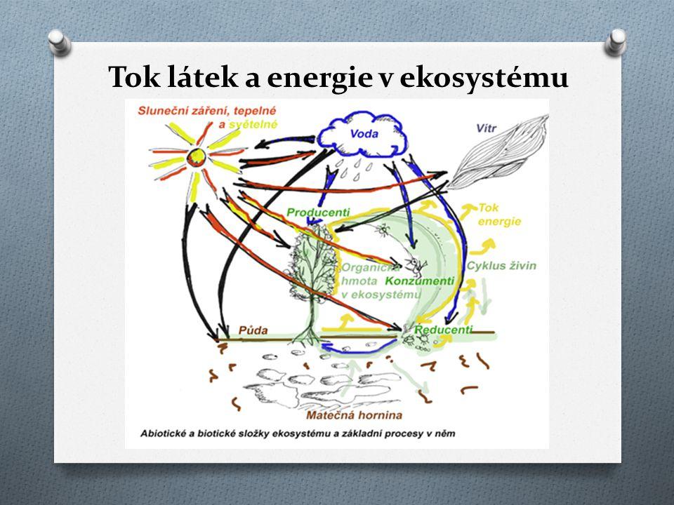 Tok látek a energie v ekosystému