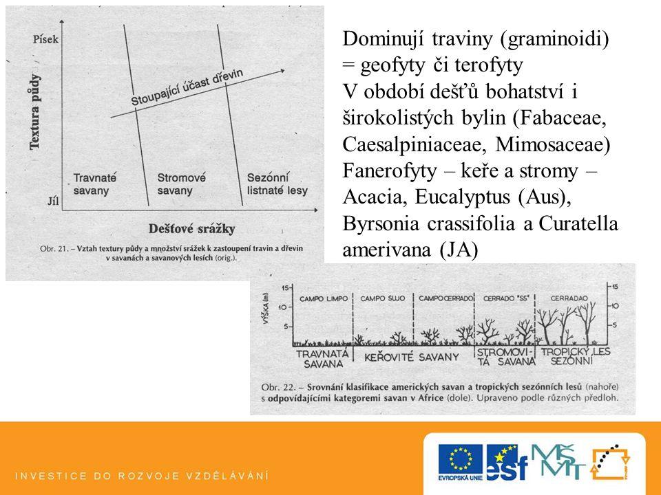 Dominují traviny (graminoidi) = geofyty či terofyty