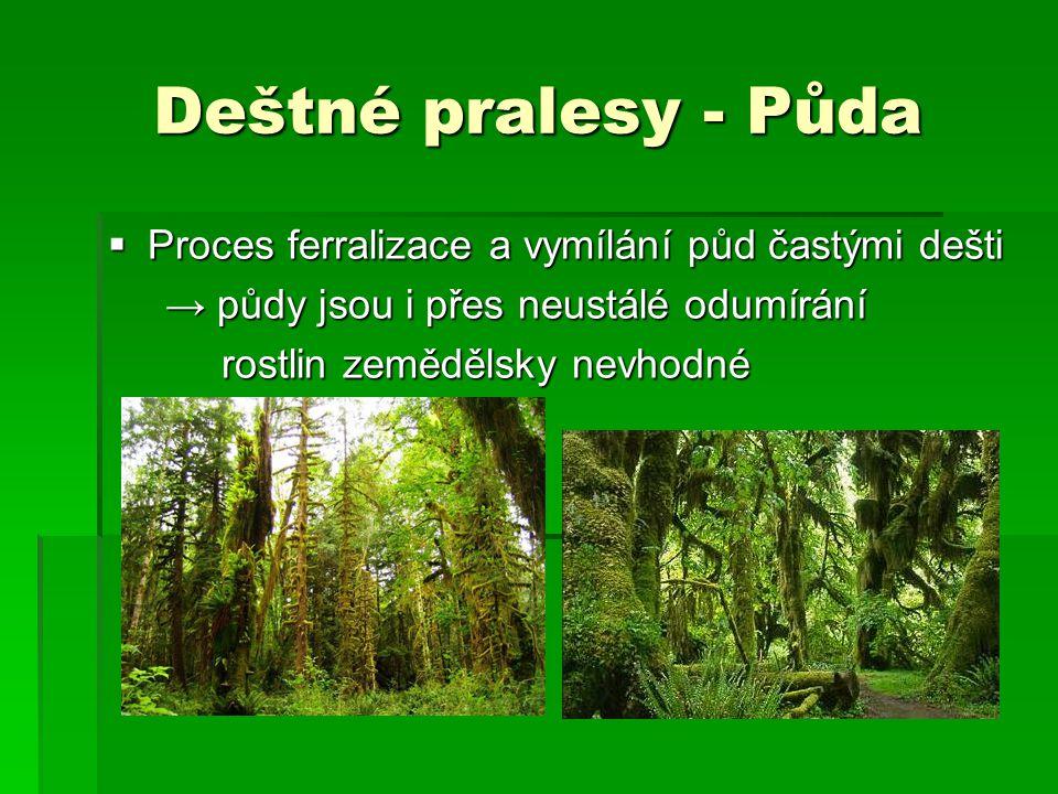 Deštné pralesy - Půda Proces ferralizace a vymílání půd častými dešti