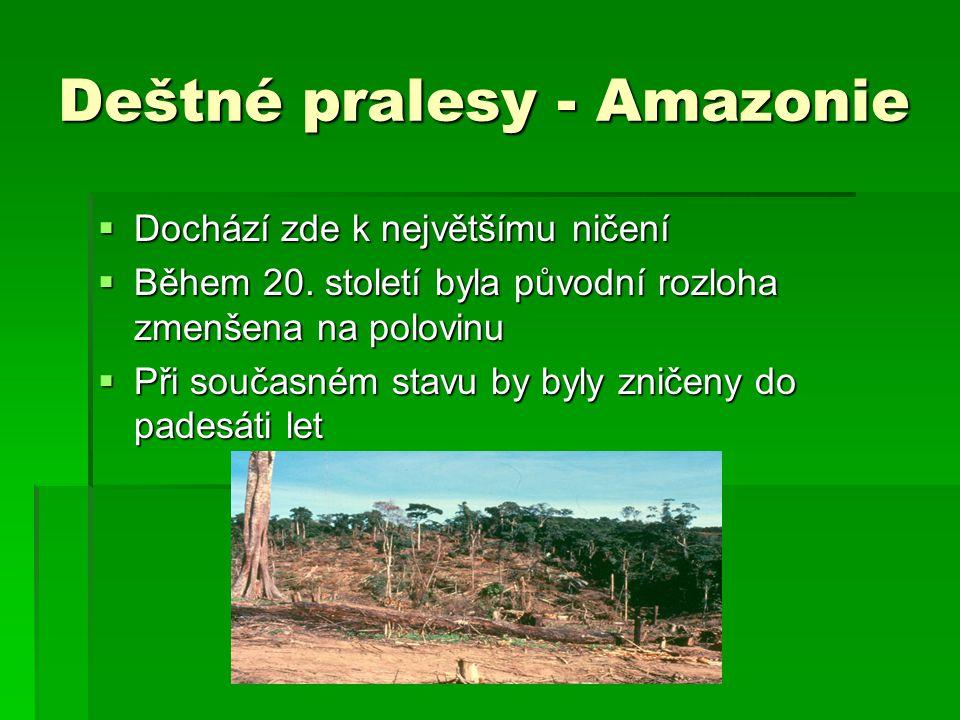 Deštné pralesy - Amazonie