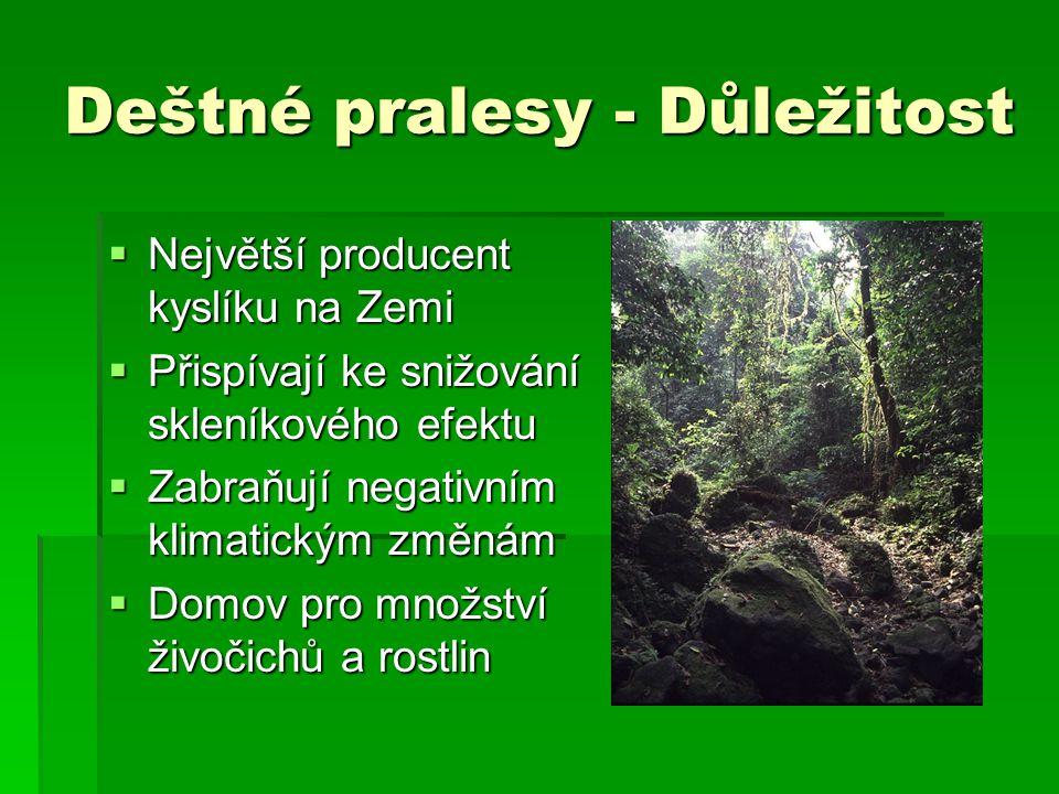 Deštné pralesy - Důležitost