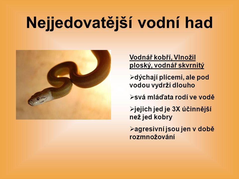 Nejjedovatější vodní had
