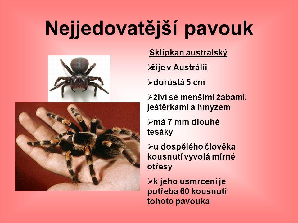 Nejjedovatější pavouk