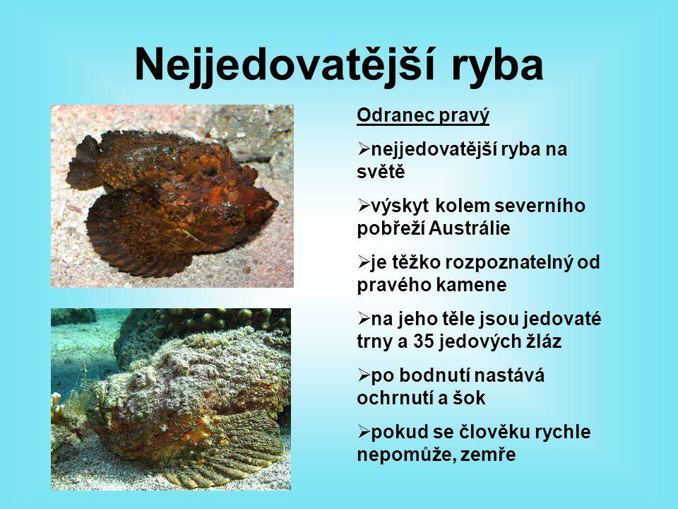 Nejjedovatější ryba Odranec pravý nejjedovatější ryba na světě