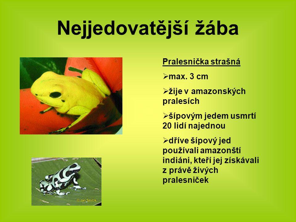 Nejjedovatější žába Pralesnička strašná max. 3 cm