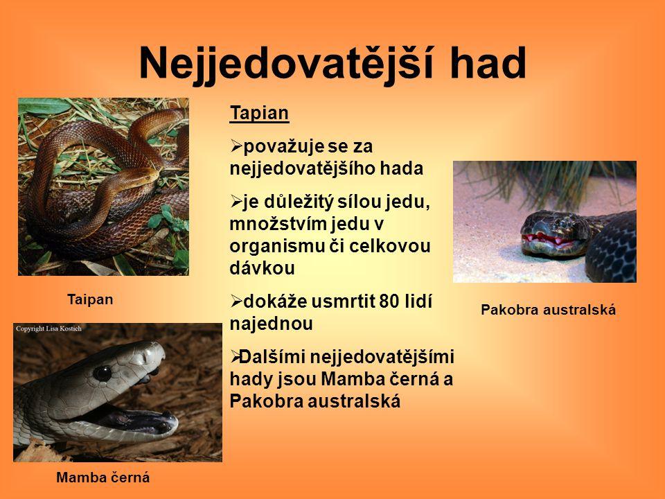 Nejjedovatější had Tapian považuje se za nejjedovatějšího hada
