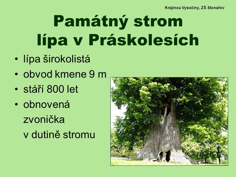 Památný strom lípa v Práskolesích