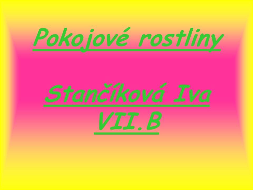 Pokojové rostliny Stančíková Iva VII.B