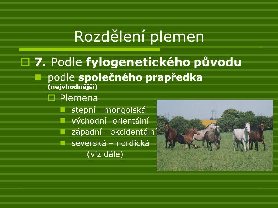 Rozdělení plemen 7. Podle fylogenetického původu