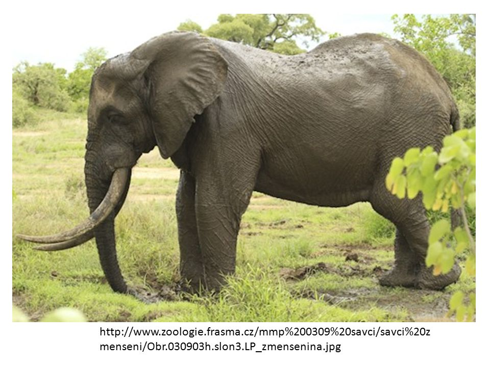 http://www. zoologie. frasma