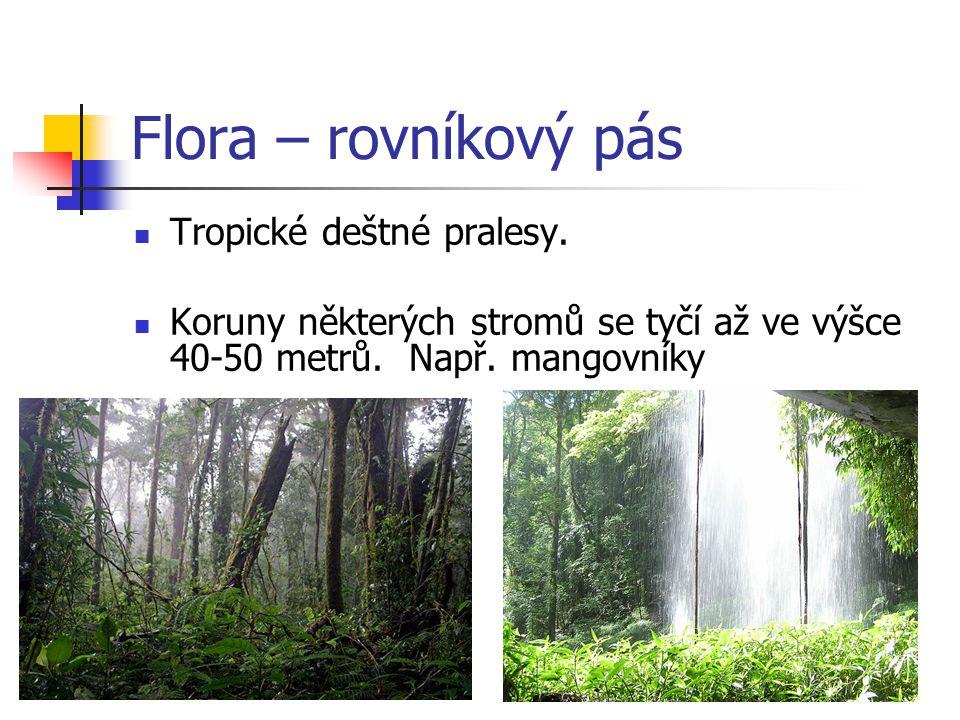 Flora – rovníkový pás Tropické deštné pralesy.