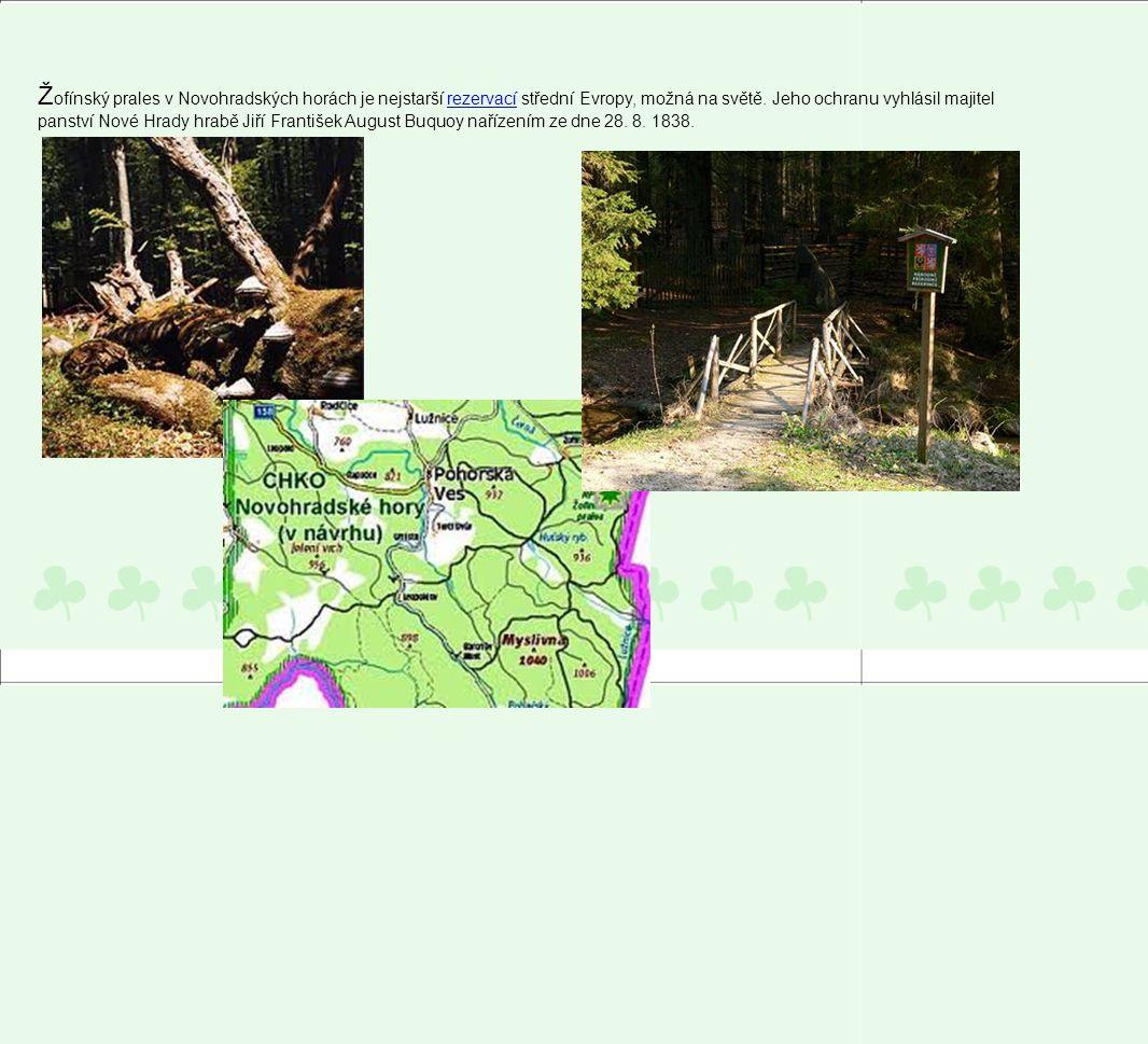 Žofínský prales v Novohradských horách je nejstarší rezervací střední Evropy, možná na světě.