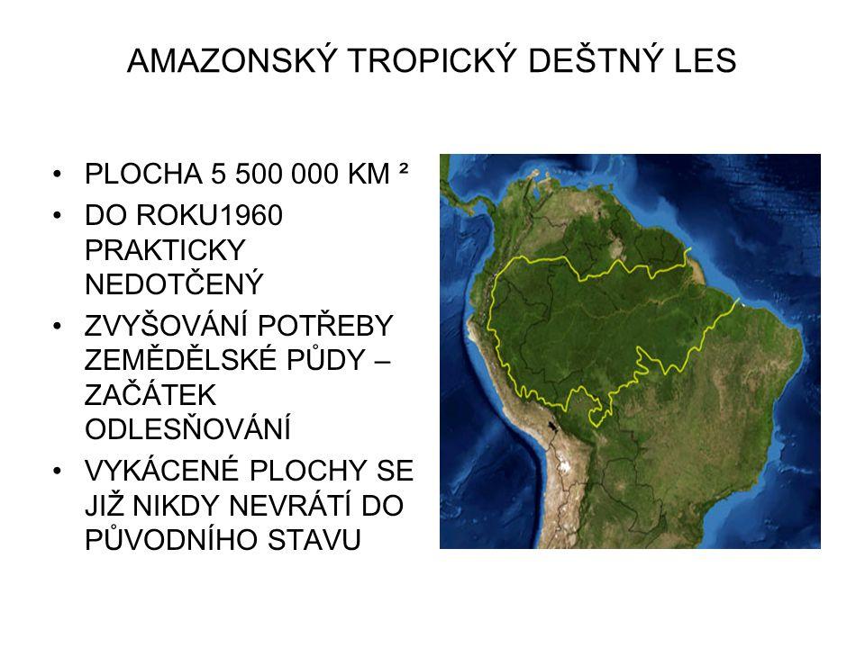 AMAZONSKÝ TROPICKÝ DEŠTNÝ LES
