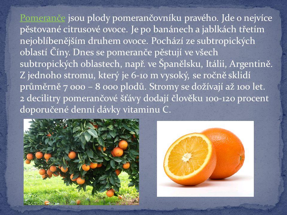 Pomeranče jsou plody pomerančovníku pravého