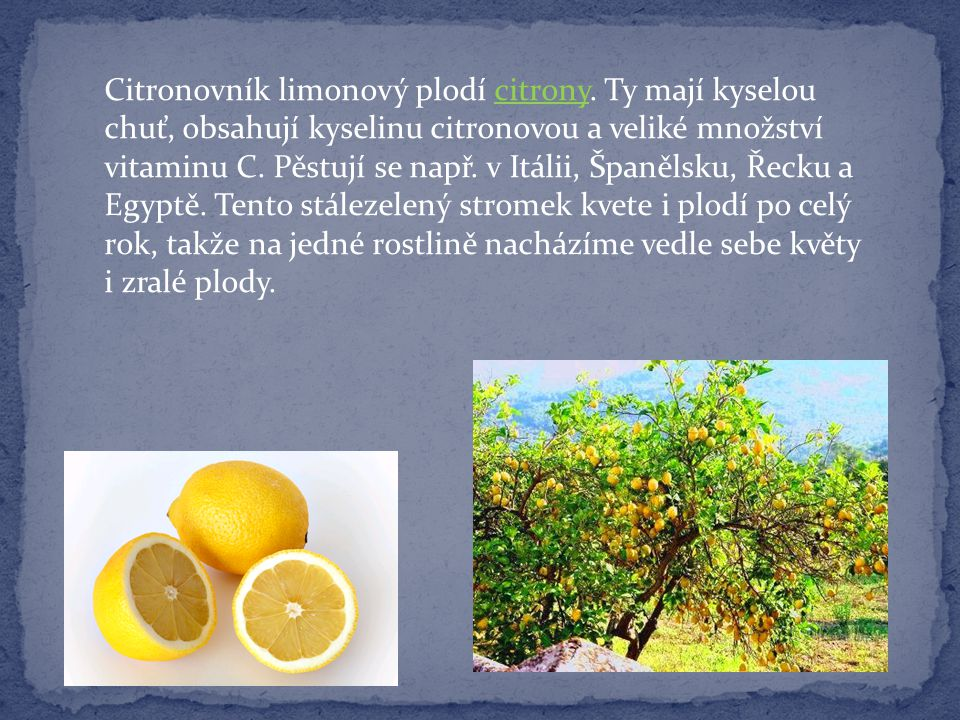 Citronovník limonový plodí citrony