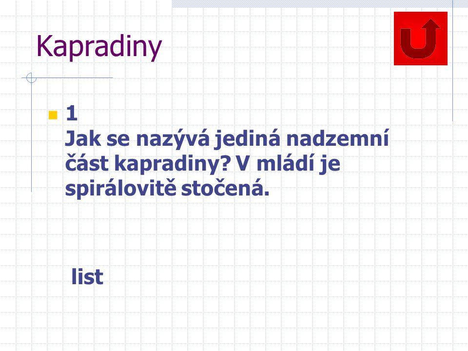 Kapradiny 1 Jak se nazývá jediná nadzemní část kapradiny V mládí je spirálovitě stočená. list