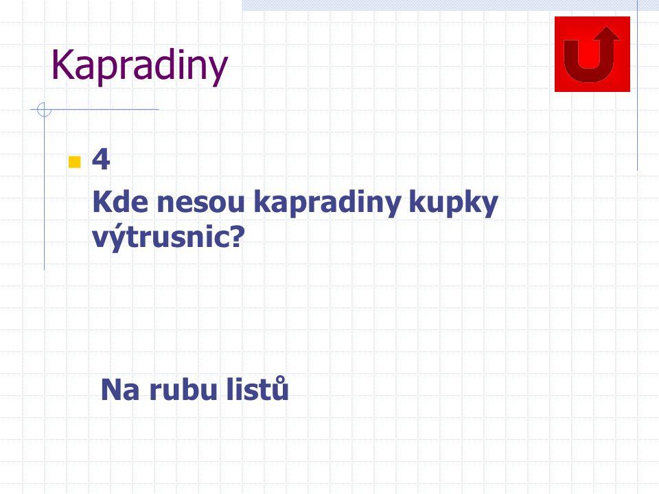 Kapradiny 4 Kde nesou kapradiny kupky výtrusnic Na rubu listů