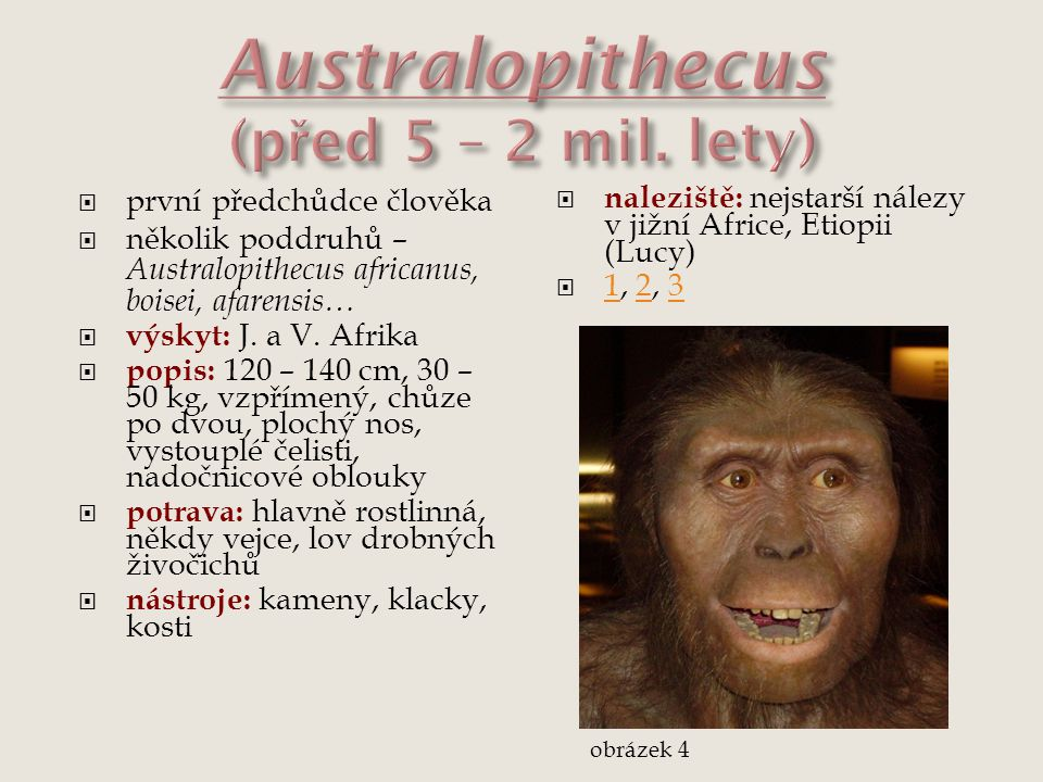 Australopithecus (před 5 – 2 mil. lety)