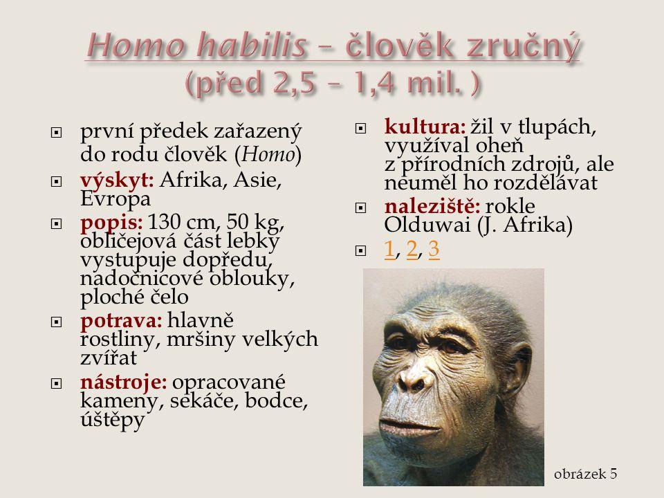 Homo habilis – člověk zručný (před 2,5 – 1,4 mil. )