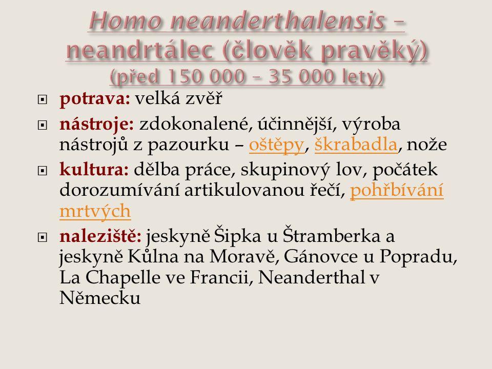 Homo neanderthalensis – neandrtálec (člověk pravěký) (před 150 000 – 35 000 lety)