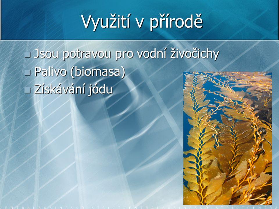 Využití v přírodě Jsou potravou pro vodní živočichy Palivo (biomasa)