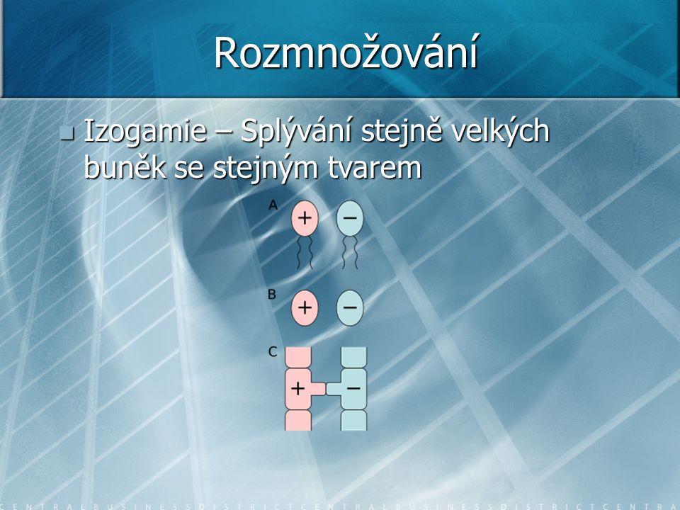 Rozmnožování Izogamie – Splývání stejně velkých buněk se stejným tvarem