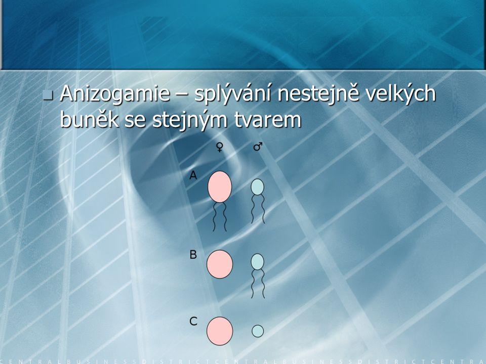 Anizogamie – splývání nestejně velkých buněk se stejným tvarem