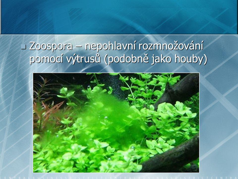 Zoospora – nepohlavní rozmnožování pomocí výtrusů (podobně jako houby)
