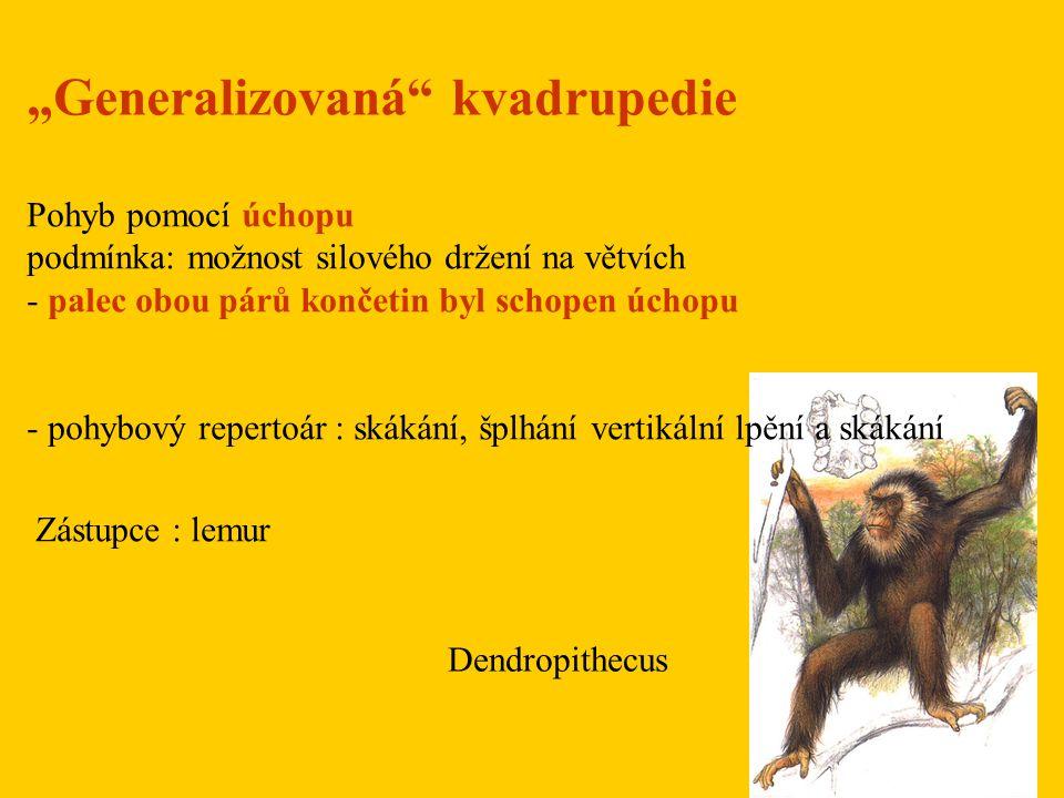 """Generalizovaná kvadrupedie"