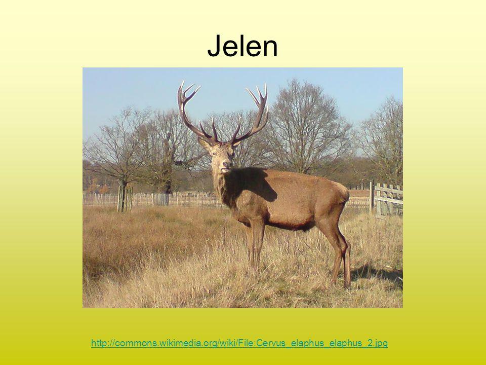 Jelen http://commons.wikimedia.org/wiki/File:Cervus_elaphus_elaphus_2.jpg