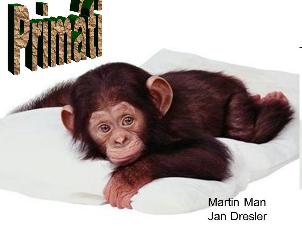 Primáti Martin Man Jan Dresler