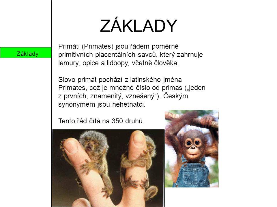 ZÁKLADY Primáti (Primates) jsou řádem poměrně primitivních placentálních savců, který zahrnuje lemury, opice a lidoopy, včetně člověka.
