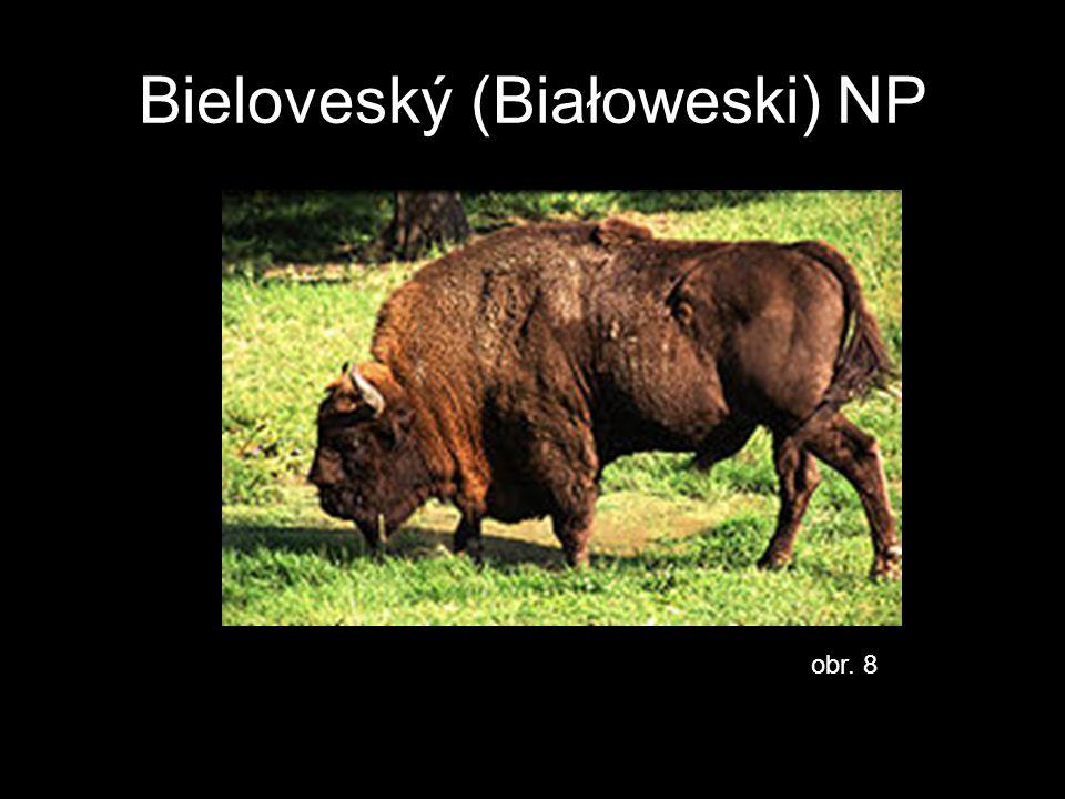 Bieloveský (Białoweski) NP