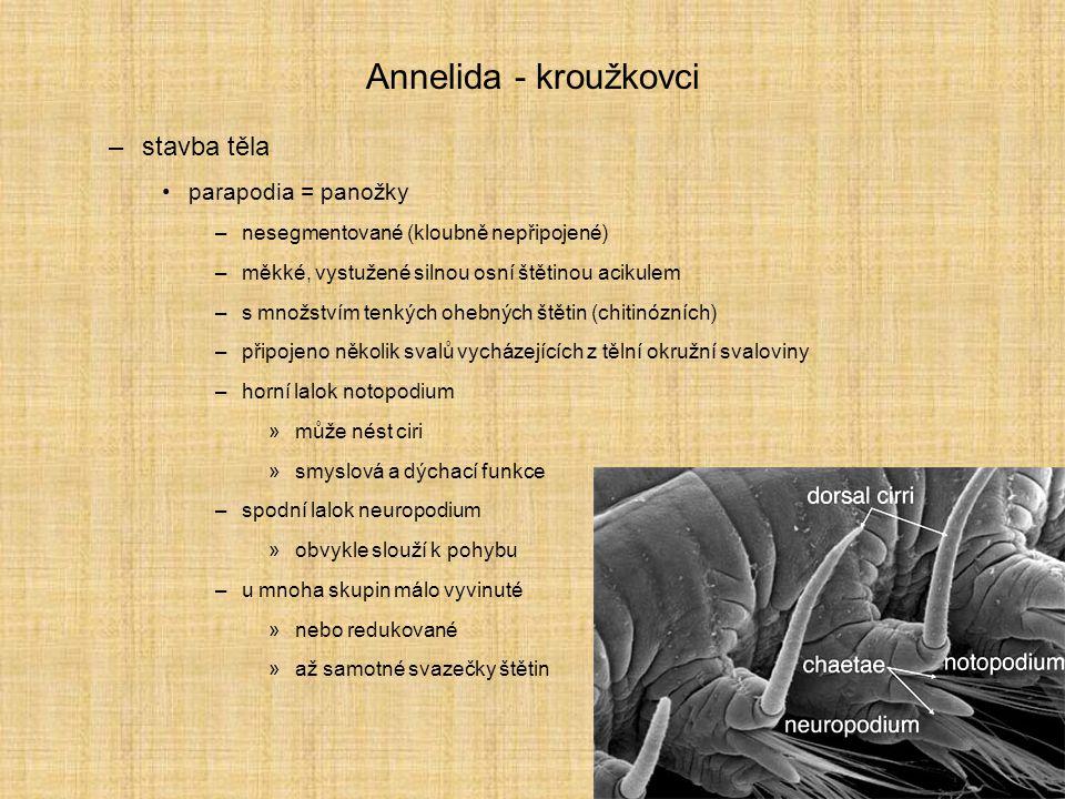Annelida - kroužkovci stavba těla parapodia = panožky