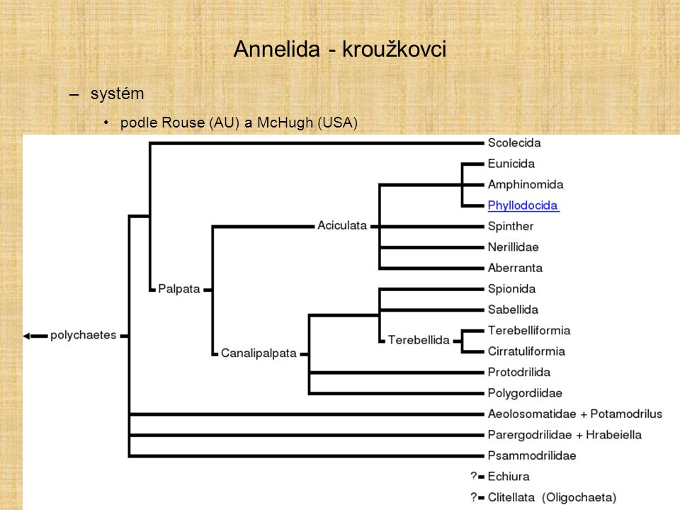 Annelida - kroužkovci systém podle Rouse (AU) a McHugh (USA)