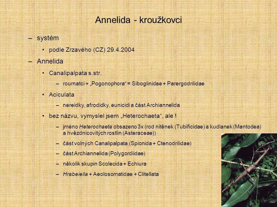 Annelida - kroužkovci systém Annelida podle Zrzavého (CZ) 29.4.2004