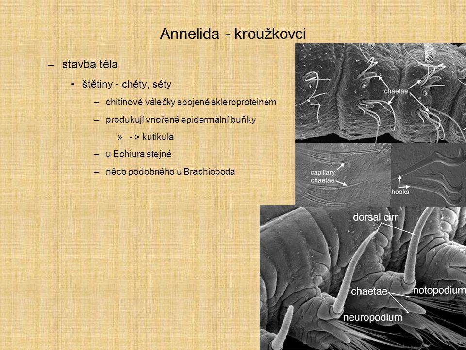 Annelida - kroužkovci stavba těla štětiny - chéty, séty