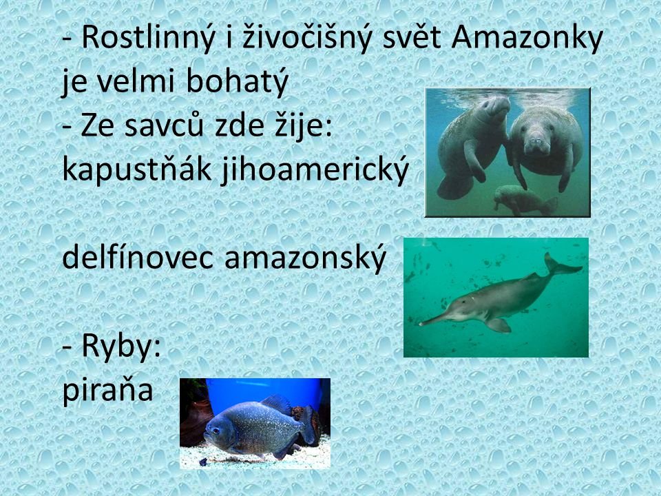 - Rostlinný i živočišný svět Amazonky je velmi bohatý - Ze savců zde žije: kapustňák jihoamerický delfínovec amazonský - Ryby: piraňa
