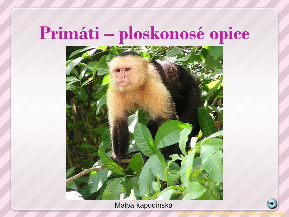 Primáti – ploskonosé opice