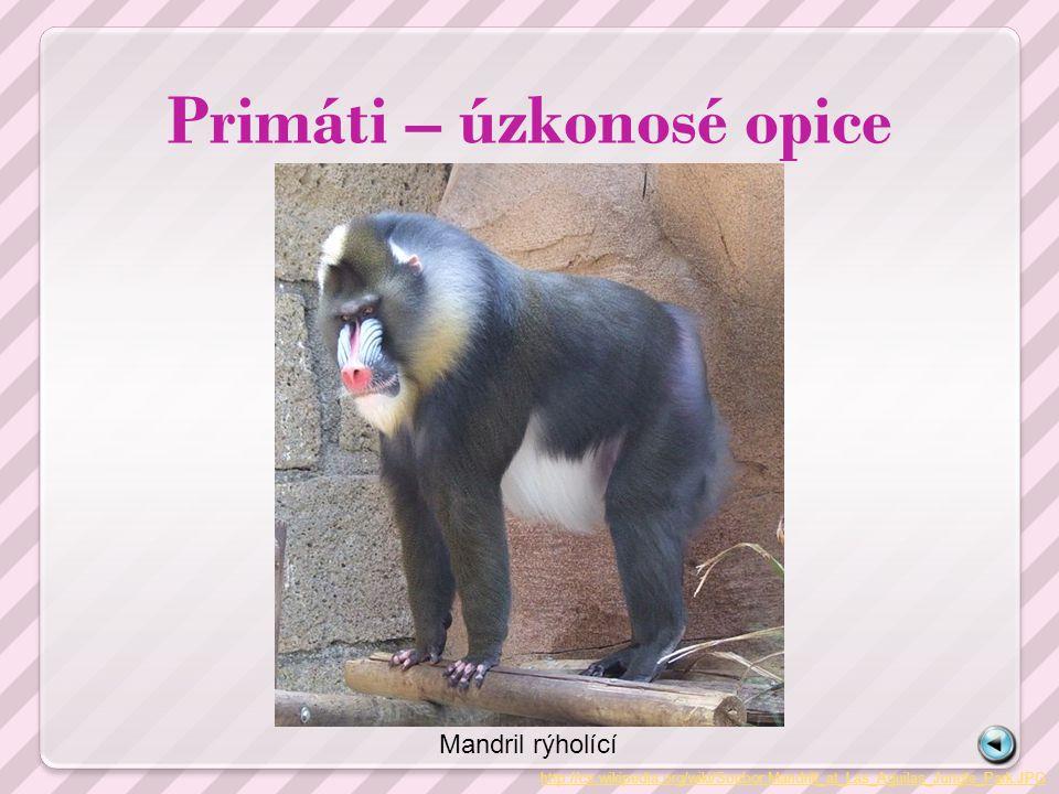 Primáti – úzkonosé opice
