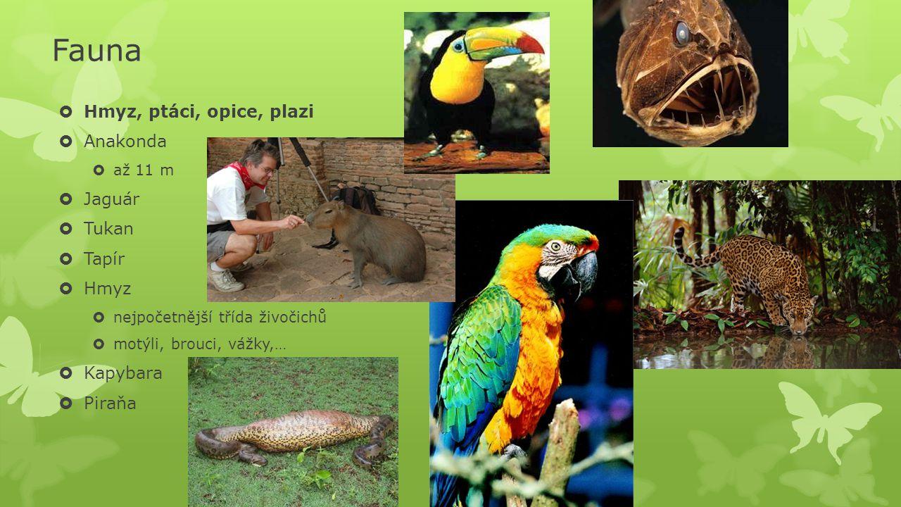 Fauna Hmyz, ptáci, opice, plazi Anakonda Jaguár Tukan Tapír Hmyz