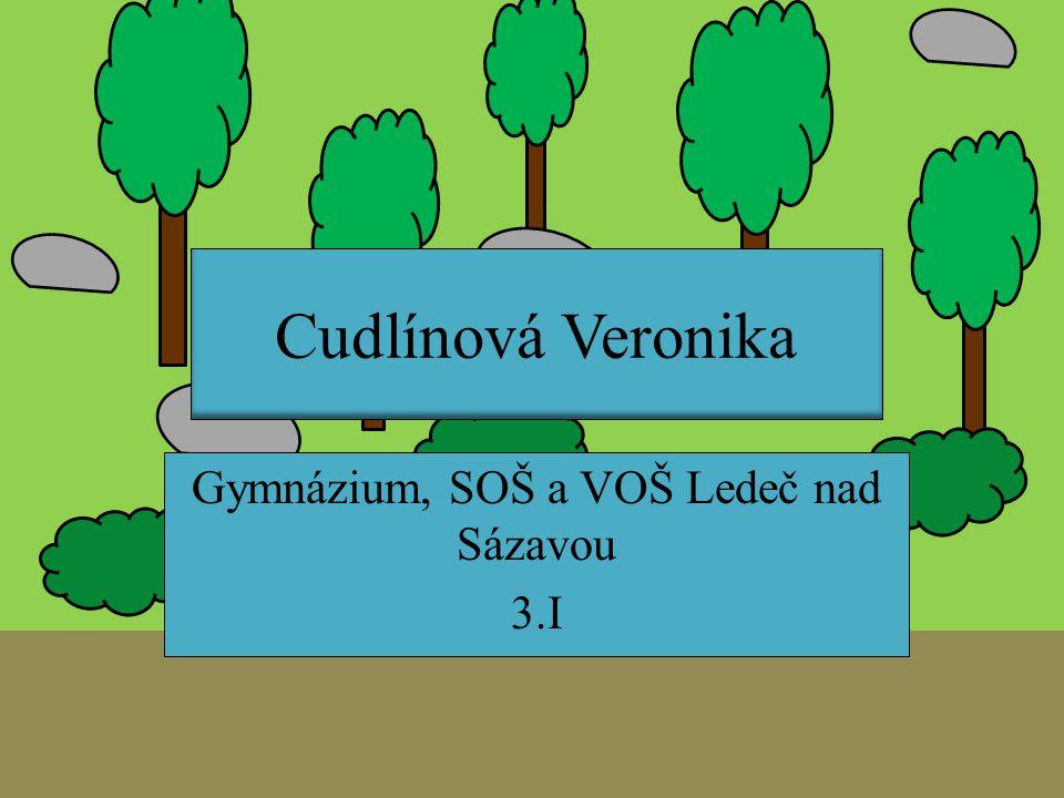 Gymnázium, SOŠ a VOŠ Ledeč nad Sázavou 3.I