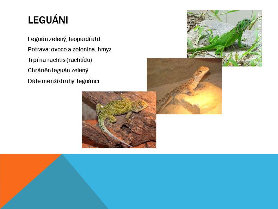 Leguáni Leguán zelený, leopardí atd.