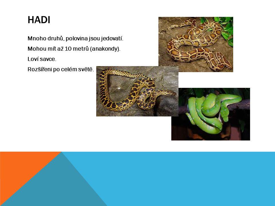 Hadi Mnoho druhů, polovina jsou jedovatí. Mohou mít až 10 metrů (anakondy).
