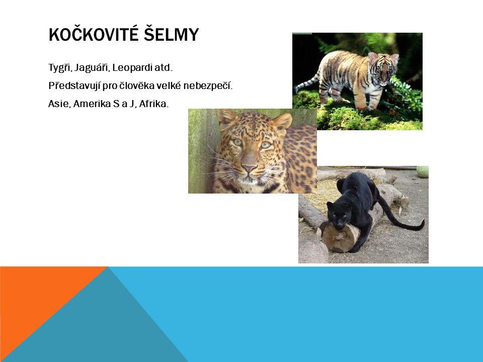 Kočkovité šelmy Tygři, Jaguáři, Leopardi atd. Představují pro člověka velké nebezpečí.